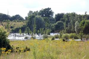 Pantener Moor Hellmoor