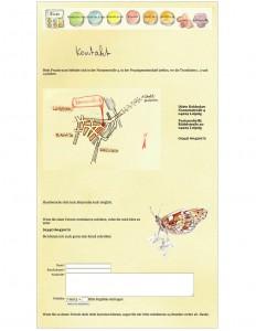 Website Gestaltung in Ratzeburg