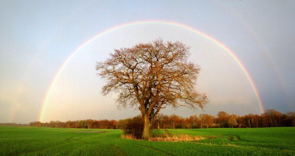 regenbogen baum